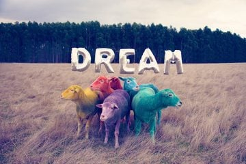 gray-malin-dream-series-rainbow-sheep-01
