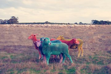gray-malin-dream-series-rainbow-sheep-03