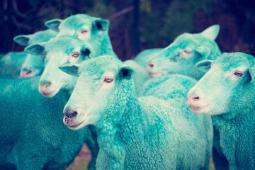gray-malin-dream-series-rainbow-sheep-05