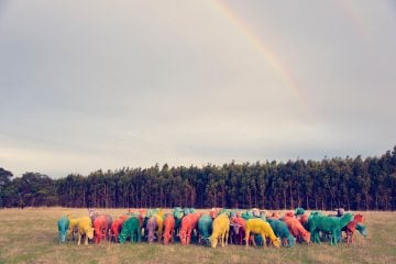 gray-malin-dream-series-rainbow-sheep-06