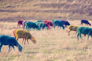 gray-malin-dream-series-rainbow-sheep-07