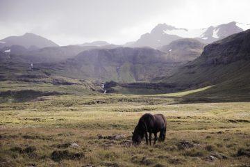 Iceland_Ignant_024