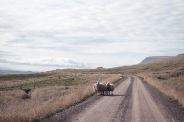 Iceland_Ignant_026