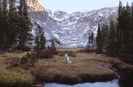 The Adventures of John & Wolf