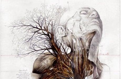 Anatomical illustrations by Nunzio Paci