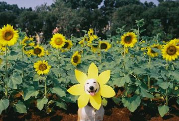 Gluta_Happy_Dog_02