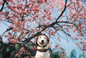 Gluta_Happy_Dog_05