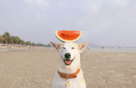 Gluta, The Happiest Dog In The World