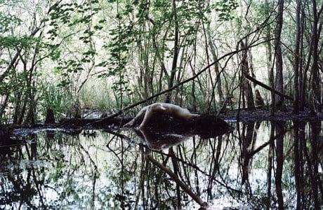 La Forêt by Julian Feeld