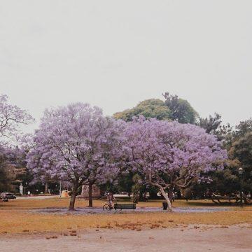 mentaylunares_instagram_02