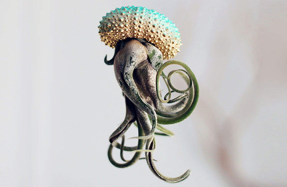 Cathy Van Hoang's Air Plant Jellyfish