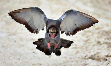 Sarah DeRemer_Birds_01