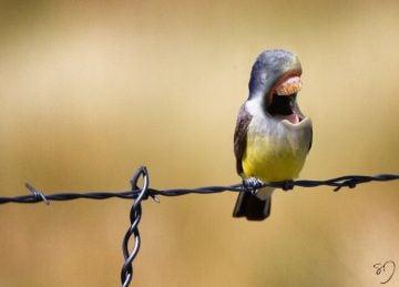 Sarah DeRemer_Birds_08