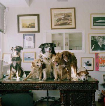 In-Dogs-We_Trust-13