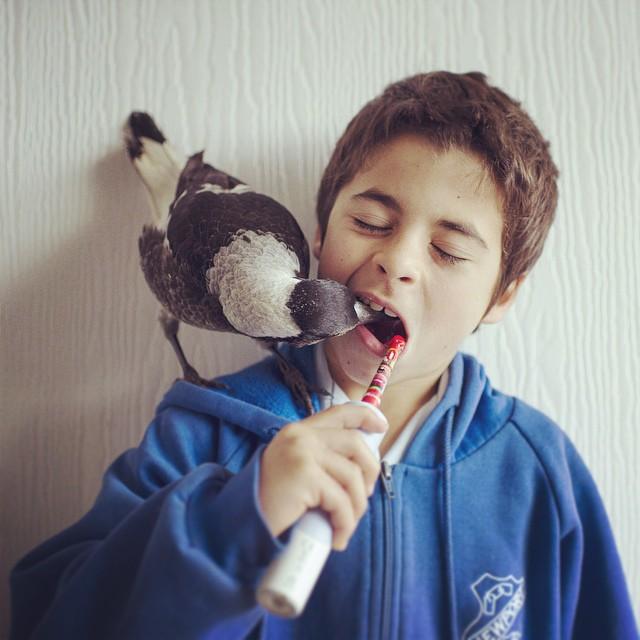 A Friendship Between A Bird And A Boy Captured By Cameron