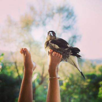 penguinthemagpie_Instagram_08