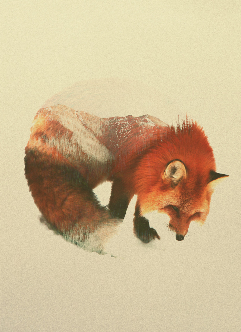 double exposure animal portraits by andreas lie ignant com