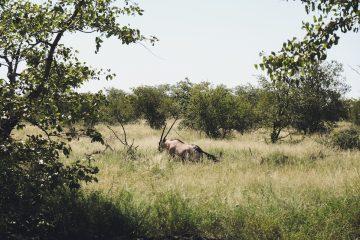 Southafrica_Anke_17
