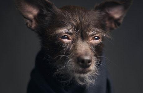dog_human_pre