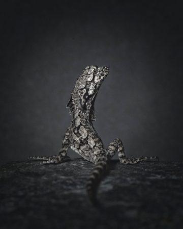 vincent-legrange_photography-02