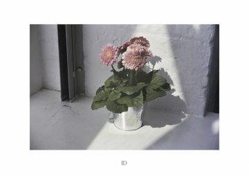 59252-3460530-ID_pollybrown