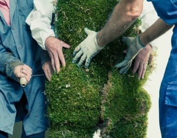 Man being dressed in a suit of moss. The Moss Men of Bejar.