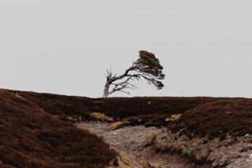windswept_pre