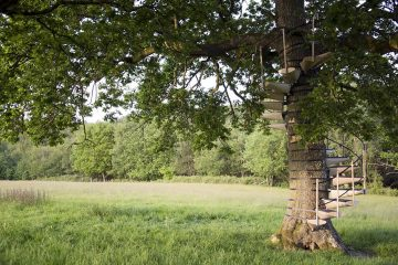 canopy_tree_stairs-thor_ter_kulve_robert_mcintyre_design_01