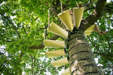canopy_tree_stairs-thor_ter_kulve_robert_mcintyre_design_03