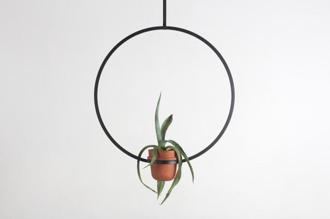 plant new