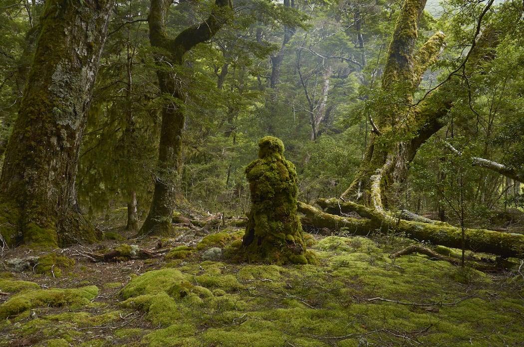 martinhill_art_Rainforest Guardian