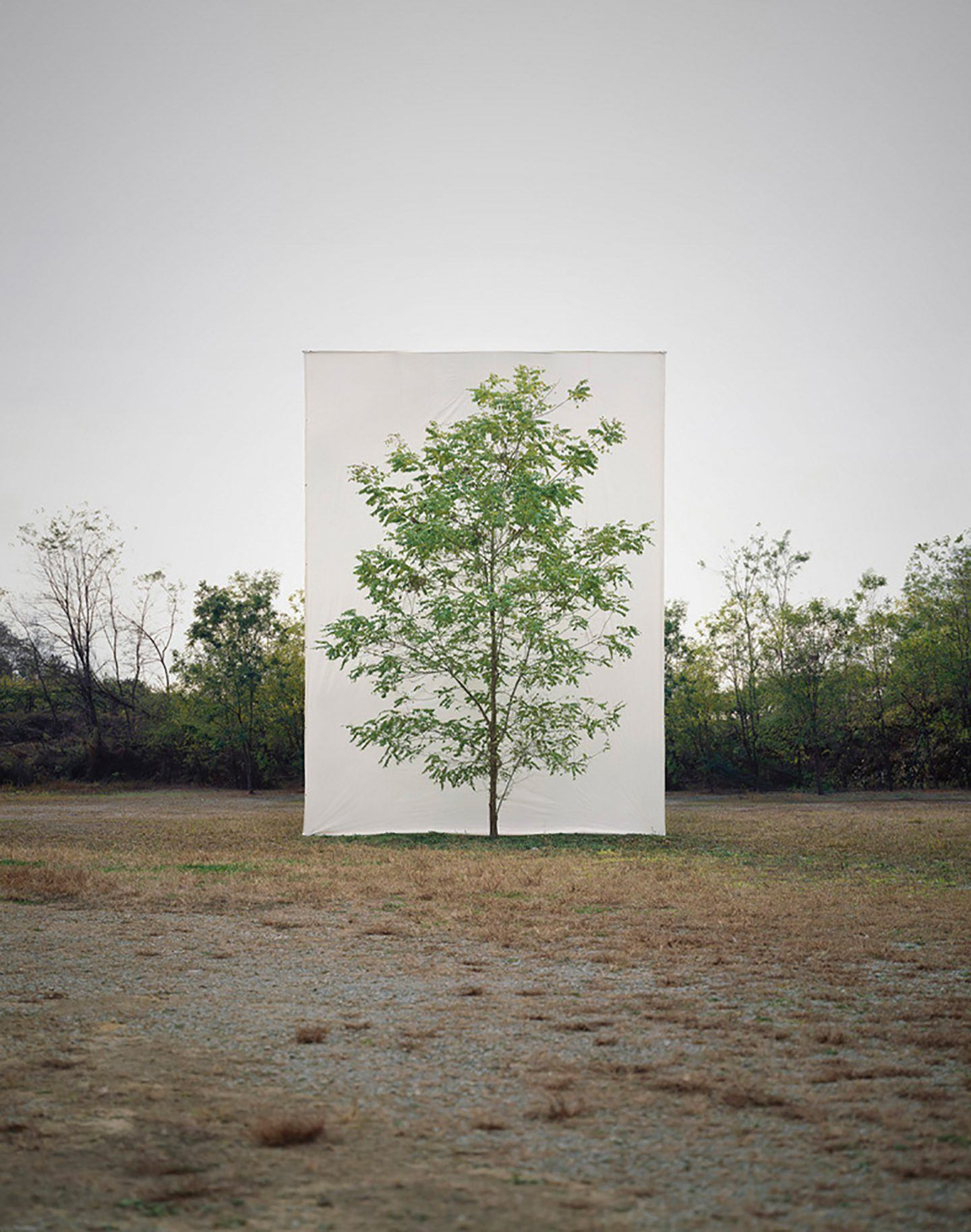 IGNANT-Art-Myoung-Ho-Lee-Tree-12