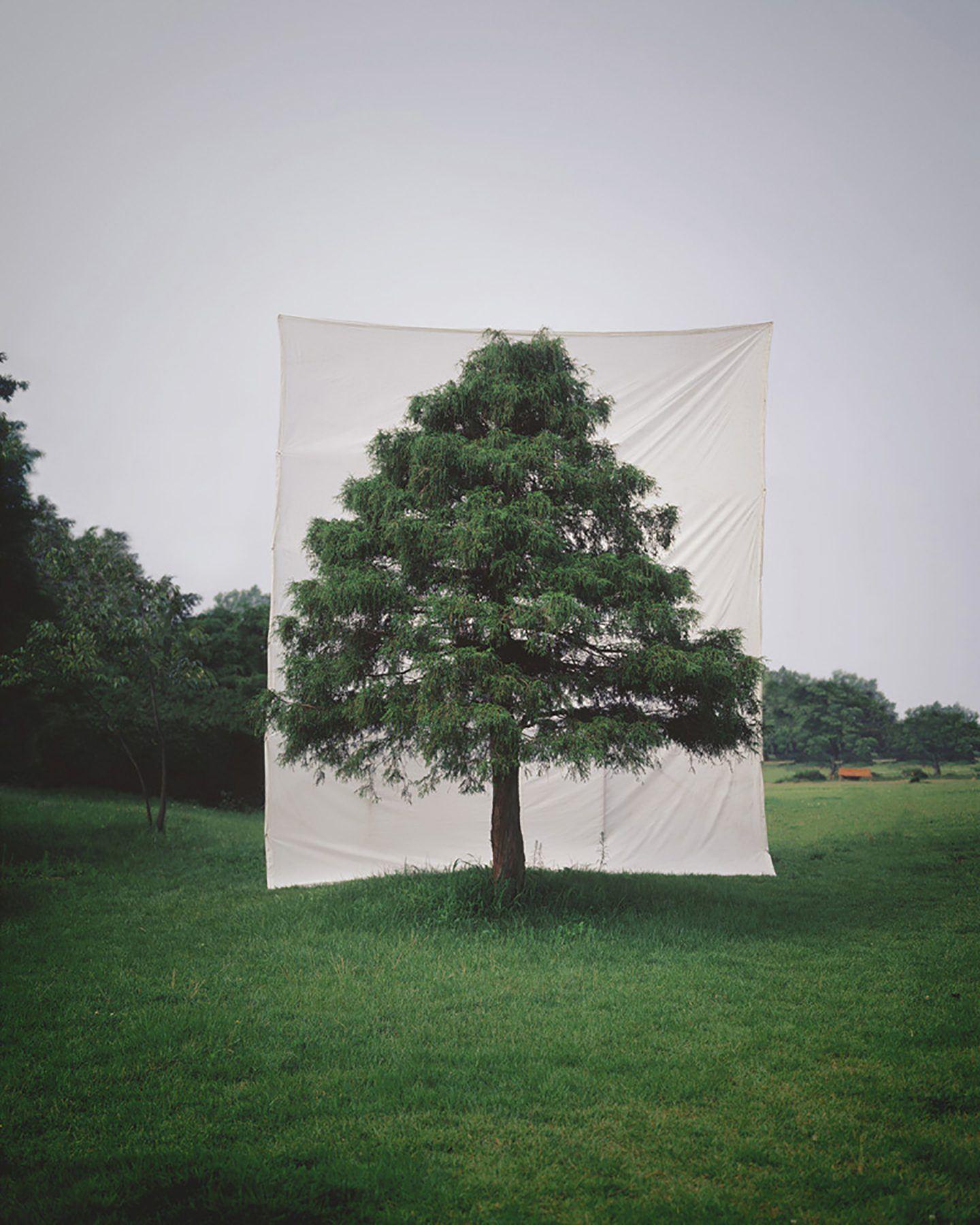 IGNANT-Art-Myoung-Ho-Lee-Tree-13