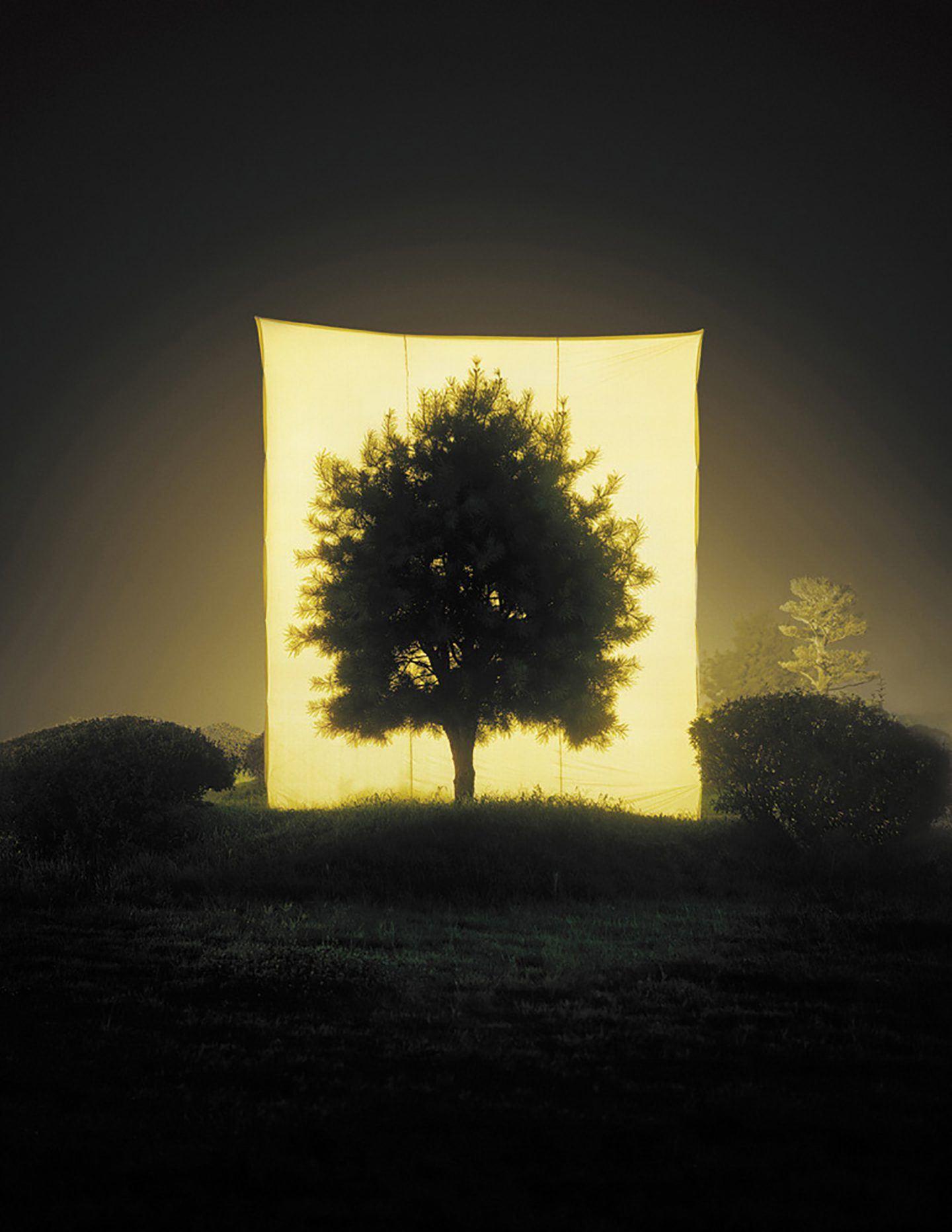 IGNANT-Art-Myoung-Ho-Lee-Tree-14