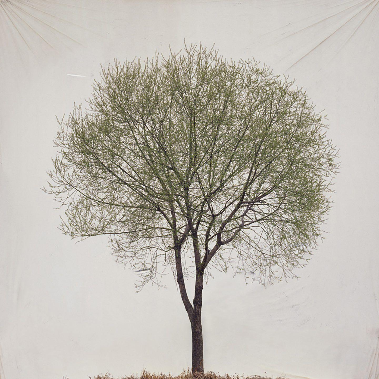 IGNANT-Art-Myoung-Ho-Lee-Tree-16