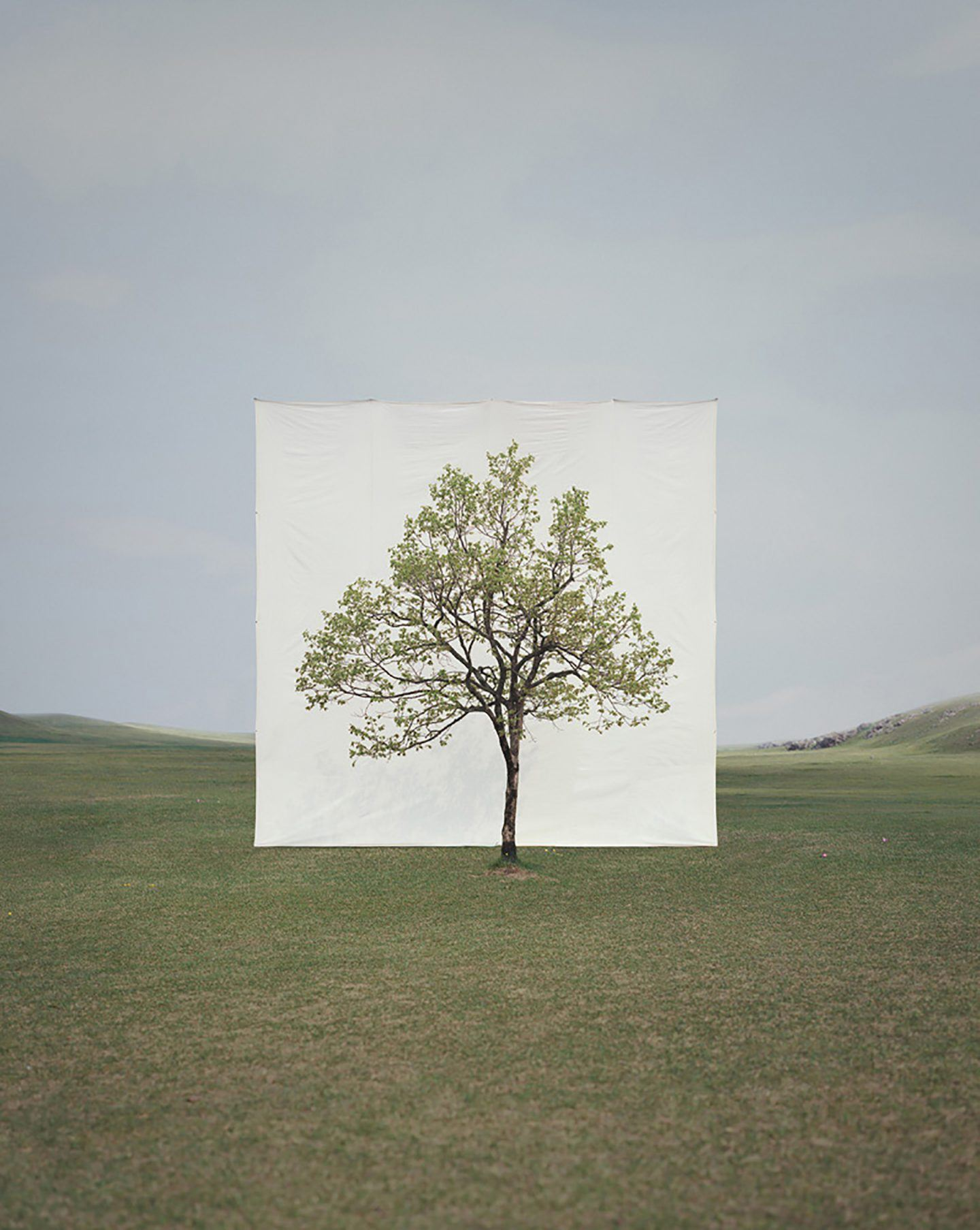 IGNANT-Art-Myoung-Ho-Lee-Tree-17