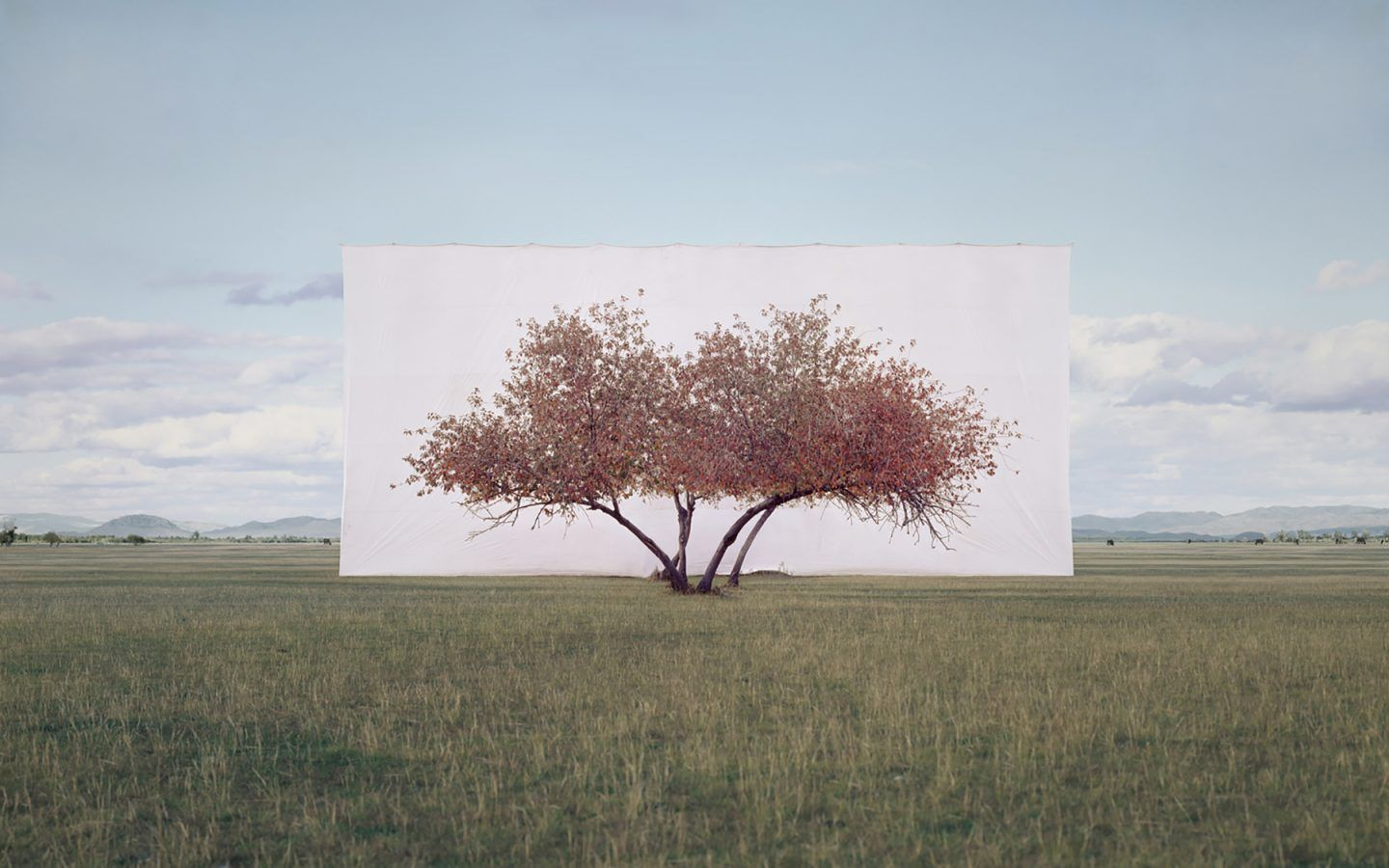 IGNANT-Art-Myoung-Ho-Lee-Tree-2