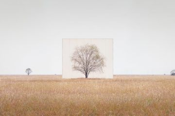 IGNANT-Art-Myoung-Ho-Lee-Tree-4