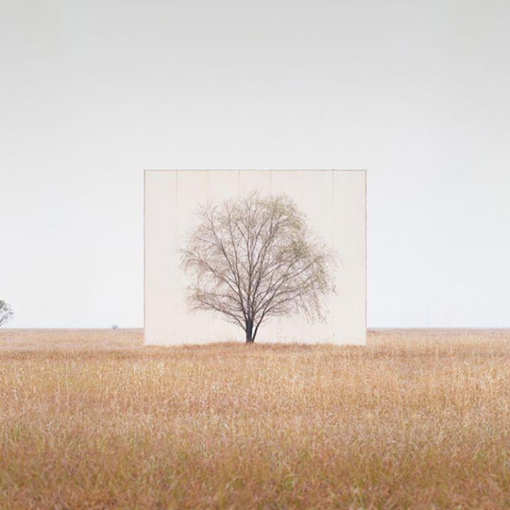 IGNANT-Art-Myoung-Ho-Lee-Tree-4