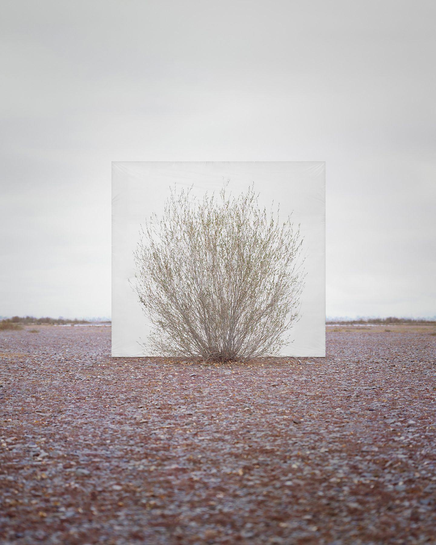IGNANT-Art-Myoung-Ho-Lee-Tree-6
