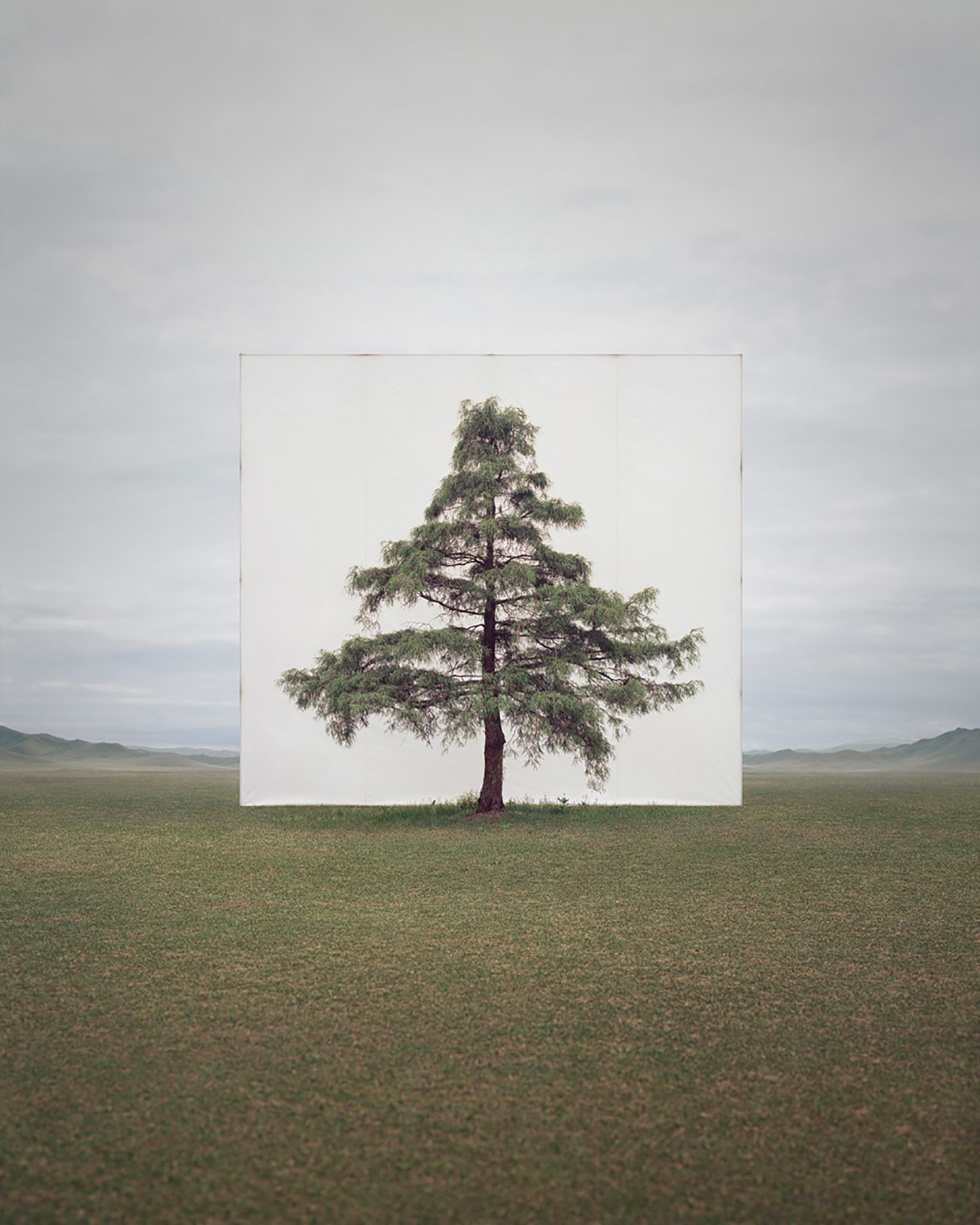 IGNANT-Art-Myoung-Ho-Lee-Tree-7