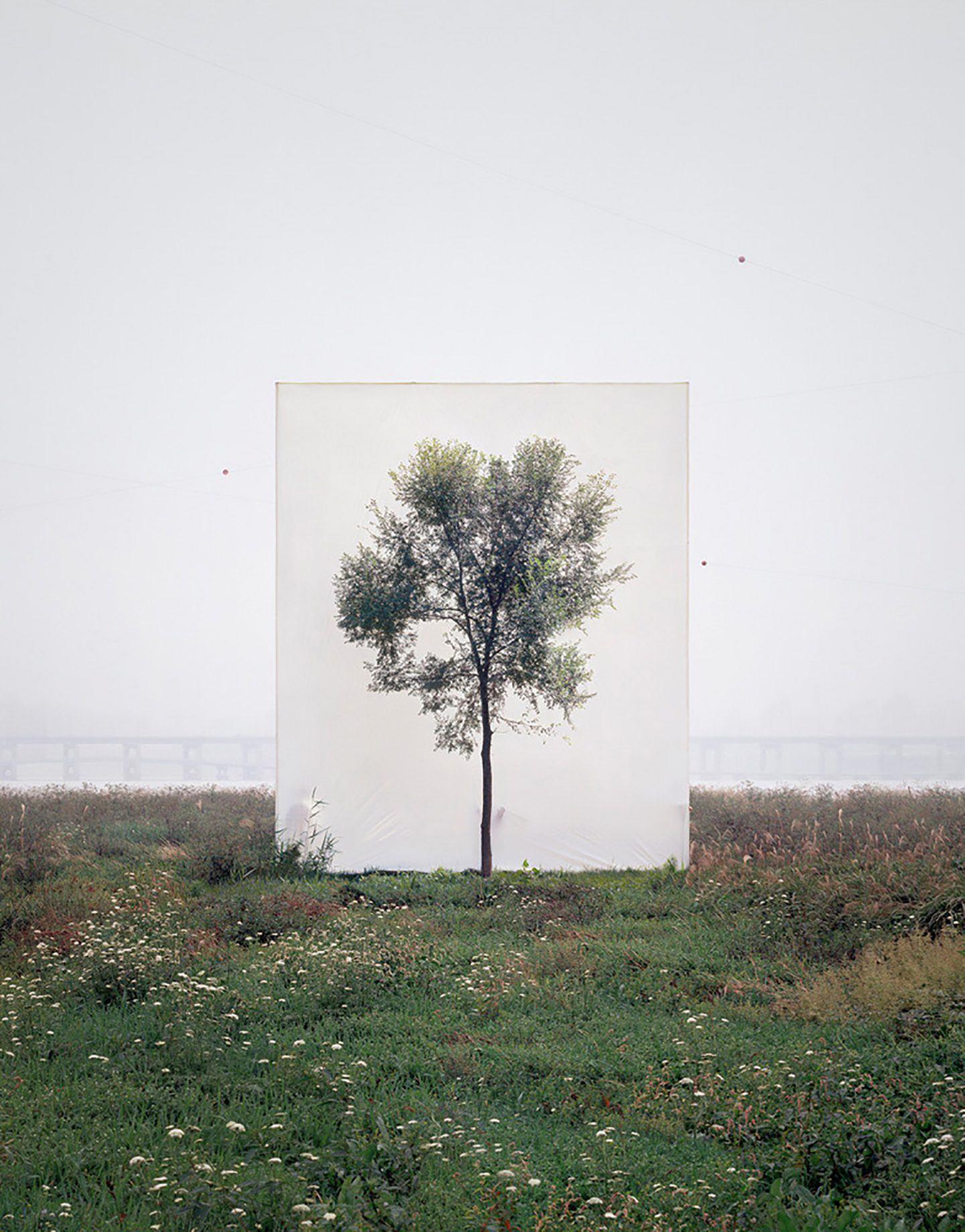 IGNANT-Art-Myoung-Ho-Lee-Tree-8