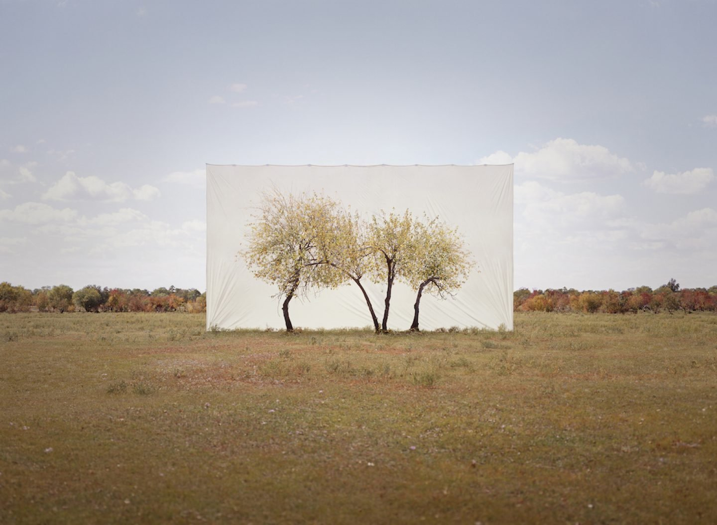 Myoung_Ho_Lee_Tree...4,2011