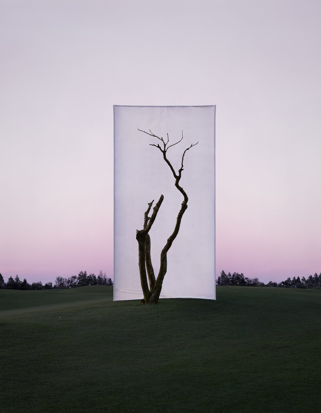 Myoung_Ho_Lee_Tree...1_2,2011