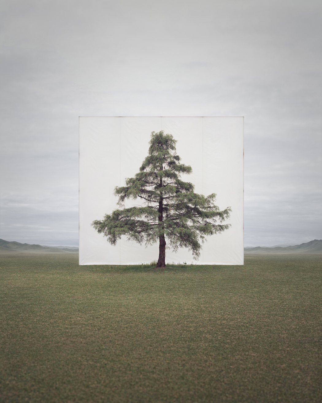 Myoung_Ho_Lee_Tree...6,2011