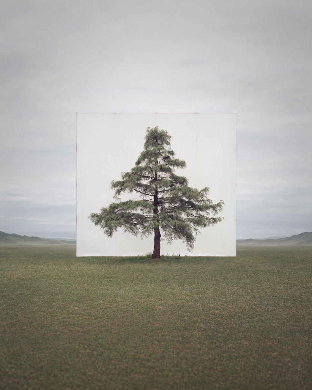 Myoung_Ho_Lee_Tree...6,2011