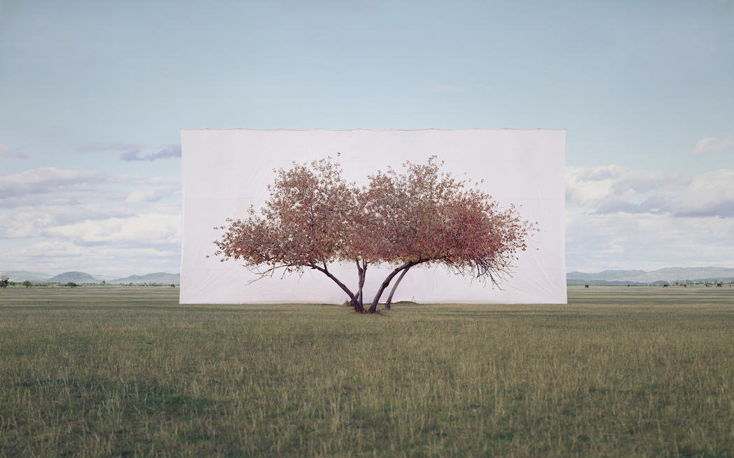 Myoung_Ho_Lee_Tree...2,2011
