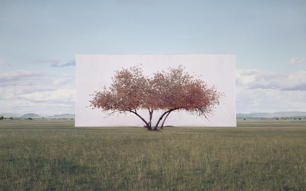 Myoung_Ho_Lee_Tree...2,2011
