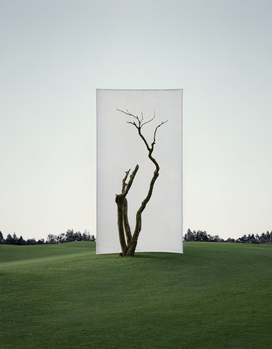 Myoung_Ho_Lee_Tree...1_1,2011