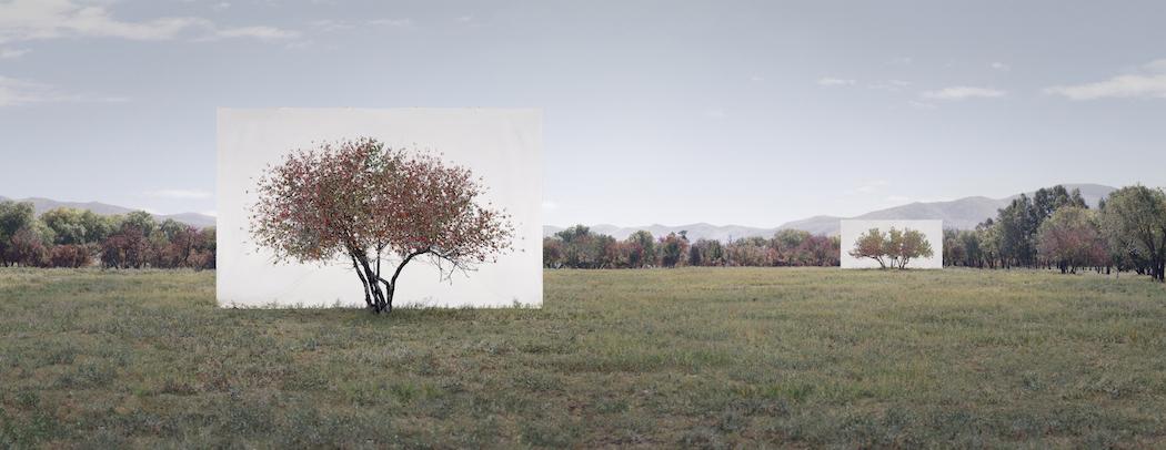 Myoung_Ho_Lee_Tree...7,2011